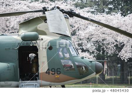 航空自衛隊のCH-47Jヘリコプターと桜 48045430