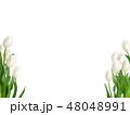 春-背景-チューリップ-白 48048991