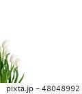 春-背景-チューリップ-白 48048992