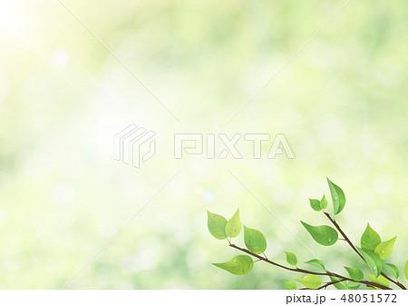 新緑-葉-グリーン-逆光-朝露-さわやか 48051572