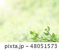 新緑-葉-グリーン-逆光-さわやか 48051573
