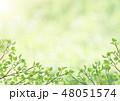 新緑-葉-グリーン-アーチ-フレーム 48051574