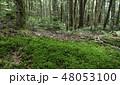 白駒の奥庭 苔の森 苔の写真 48053100