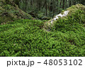 白駒の奥庭 苔の森 苔の写真 48053102