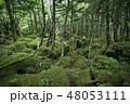 白駒の奥庭 苔の森 苔の写真 48053111