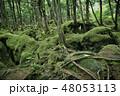 白駒の奥庭 苔の森 苔の写真 48053113