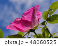 植物 お花 フラワーの写真 48060525
