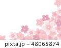 桜 花 コピースペースのイラスト 48065874