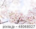 桜 春 花の写真 48068027