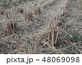 水田・収穫 48069098