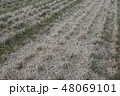 水田・収穫 48069101