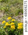 春の野原とタンポポの花 48069275