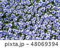 植物 花 ビオラの写真 48069394