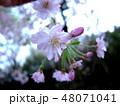 花 植物 桃色の写真 48071041