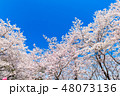 桜 満開 春の写真 48073136