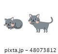 猫 ベクター ロシアンブルーのイラスト 48073812