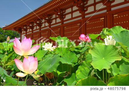 奈良・薬師寺 48075798
