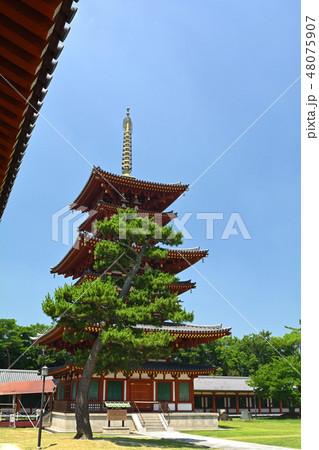 奈良・薬師寺 48075907