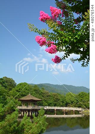 世界遺産・奈良公園 48076544