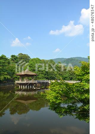 世界遺産・奈良公園 48076547