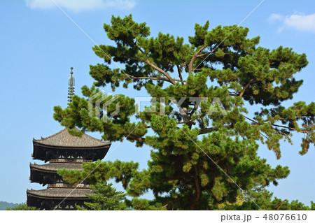 奈良・興福寺 48076610