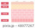 表皮の構造のシンプルでかわいいイラスト 48077267