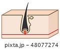 毛の構造・断面図のシンプルかわいい立体イラスト 48077274