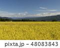 稲 箕輪町 風景の写真 48083843