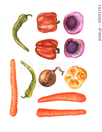 Fresh vegetables isolated on white, watercolor. 48093161