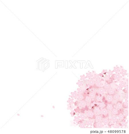 桜 満開 イラスト ベクター 春 ソメイヨシノ 48099578