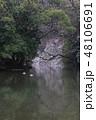 冬の栗林公園、南庭西湖、赤壁をバックに泳ぐマガモ 48106691