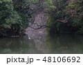 冬の栗林公園、南庭西湖、赤壁をバックに泳ぐマガモ 48106692