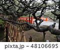 冬の栗林公園、箱松越しに見る南庭北湖の梅林橋(赤橋) 48106695