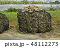 サトウキビ 砂糖黍 Saccharum officinarum 農業 収穫 宮古島 沖縄 48112273