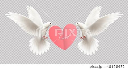White Pigeons Holding Heart  48126472