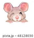 ねずみ ネズミ 動物のイラスト 48128030