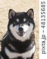 黒柴 和犬 日本犬の写真 48135685