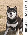 黒柴 和犬 柴犬の写真 48135691