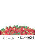 苺 フルーツ 果物のイラスト 48144924