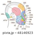 顔 筋肉 図のイラスト 48146923