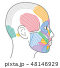 顔 筋肉 図のイラスト 48146929