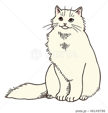 猫のイラスト(ペルシャ・白)のイラスト素材 [48149796] , PIXTA