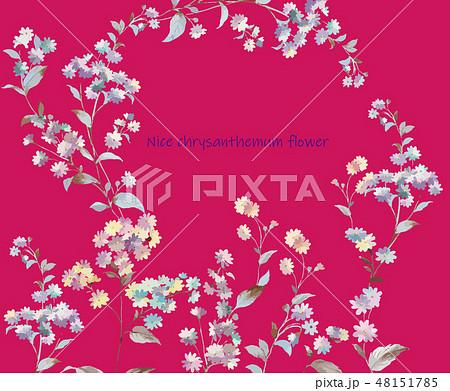 菊 キク 菊の花 48151785