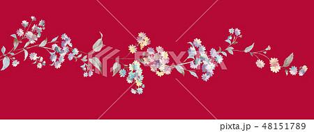 菊 キク 菊の花 48151789