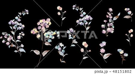 花 フラワー お花 48151802