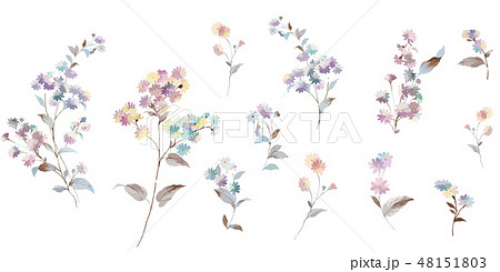 花 フラワー お花 48151803