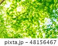 新緑イメージ 新緑 緑の写真 48156467