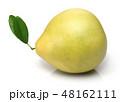 かんきつ類 シトラスフルーツ 柑橘系フルーツの写真 48162111