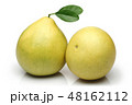 かんきつ類 シトラスフルーツ 柑橘系フルーツの写真 48162112