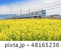 【菜の花畑 小田急線 4000形】 48165236